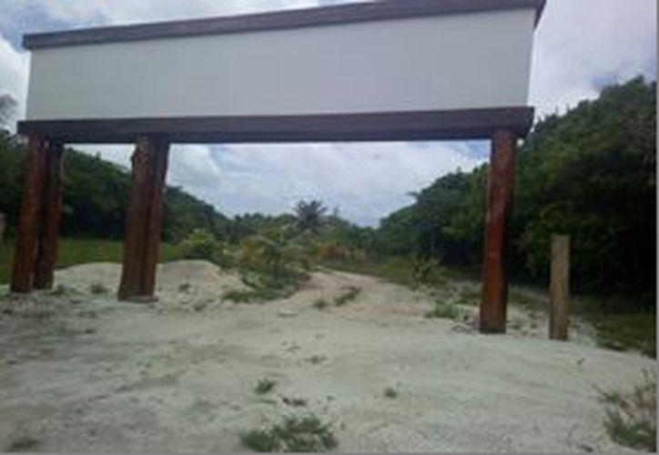 En esta área destinada para la construcción de un desarrollo inmobiliario, existe presencia de especies consideradas en riesgo.  (Joel Zamora/SIPSE)
