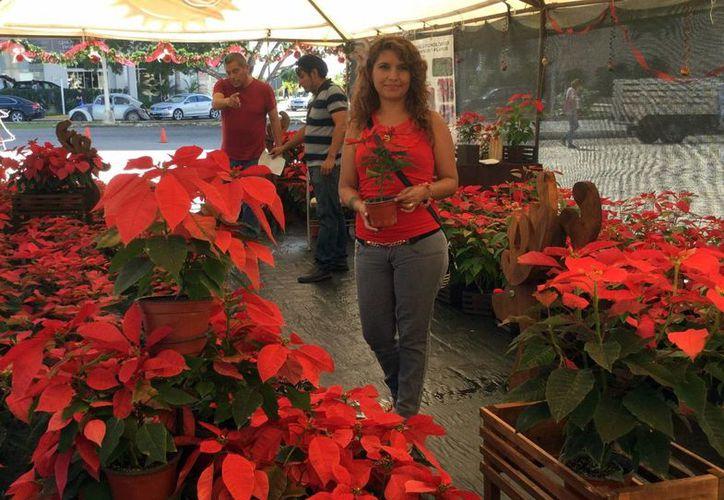 En la Feria de las Nochebuenas Yucatecas se pueden encontrar flores desde 20 pesos hasta 250 pesos. (Milenio Novedades)
