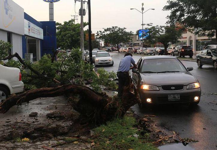 El Paseo de Montejo se vio afectado por la caída de árboles por la fuerza del viento. (Mauricio Palos/SIPSE)