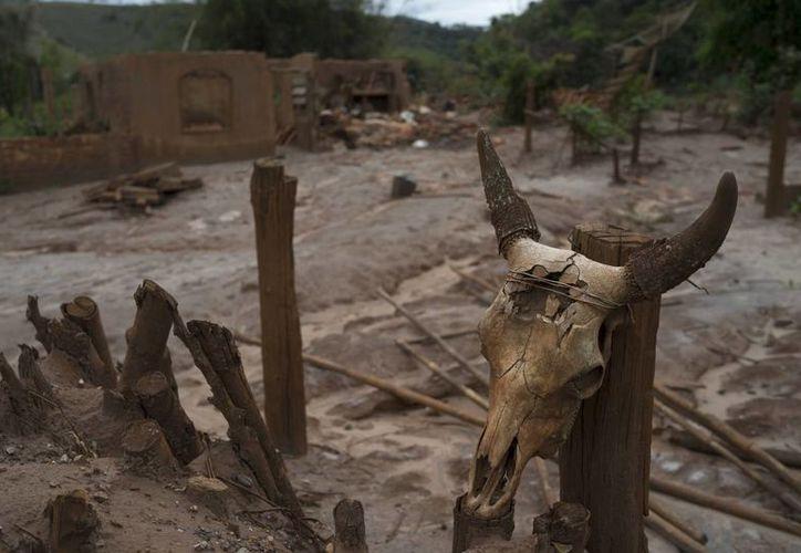 Una calavera de vaca fijada a un poste ante una aldea destrozada por un deslizamiento de tierra, provocado por el colapso de una presa el 5 de noviembre de 2015 que retenía residuos mineros en Paracatu, Brasil. (AP/Leo Correa)