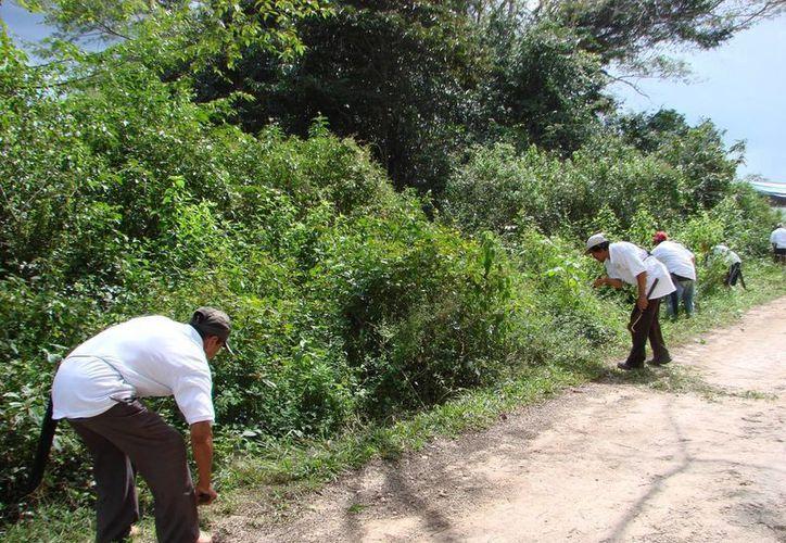 La directiva ofreció como alternativa de limpieza de maleza del camino federal Tepich-Tihosuco. (Manuel Salazar/SIPSE)