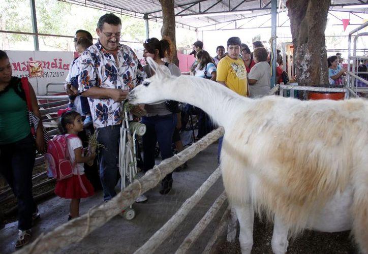 Las personas convivieron con los animales de la granja interactiva. (Juan Carlos Albornoz/SIPSE)