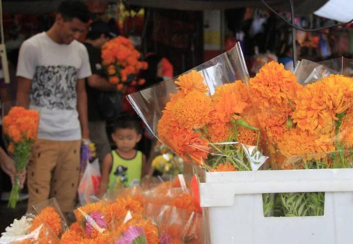 El cempasúchil, se encuentra en los centros de distribución entre los 60 y 120 pesos el manojo. (SIPSE)