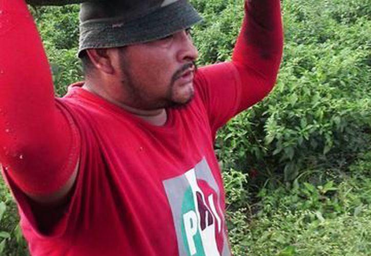 Los productores de chile jalapeño esperan cosechar este año más de 4 mil toneladas de producto. (Edgardo Rodríguez/SIPSE)