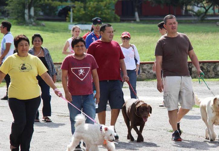La Cuarta Caminata Canina se realizará hoy sábado, ¡no te la pierdas! (Imagen ilustrativa/Milenio Novedades)
