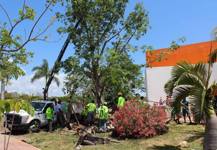 Iniciaron el proyecto reubicando un árbol en el planetario Sayab. (Adrián Barreto/SIPSE)