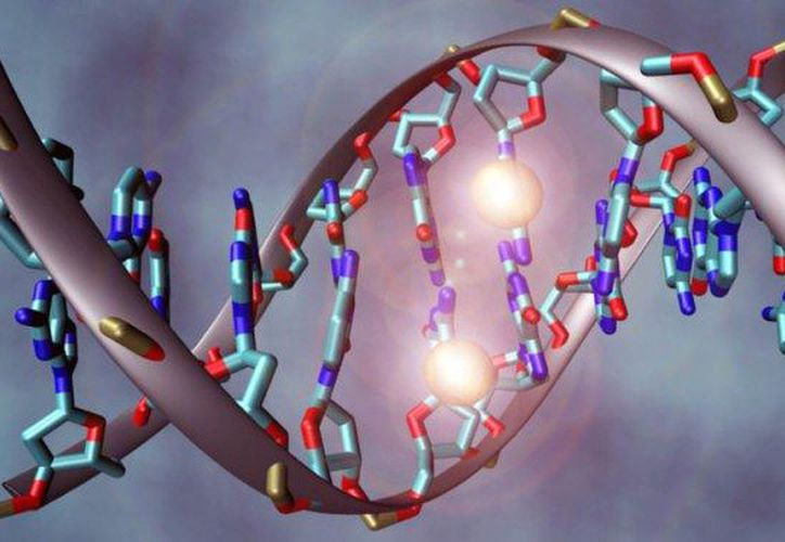 Cada genoma humano contiene 3 billones de pares genéticos. (juanizasa25)