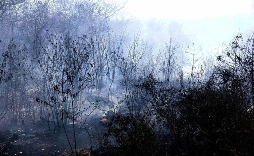 El hombre ocasiona el 99 por ciento de los siniestros forestales. (José Acosta/SIPSE)
