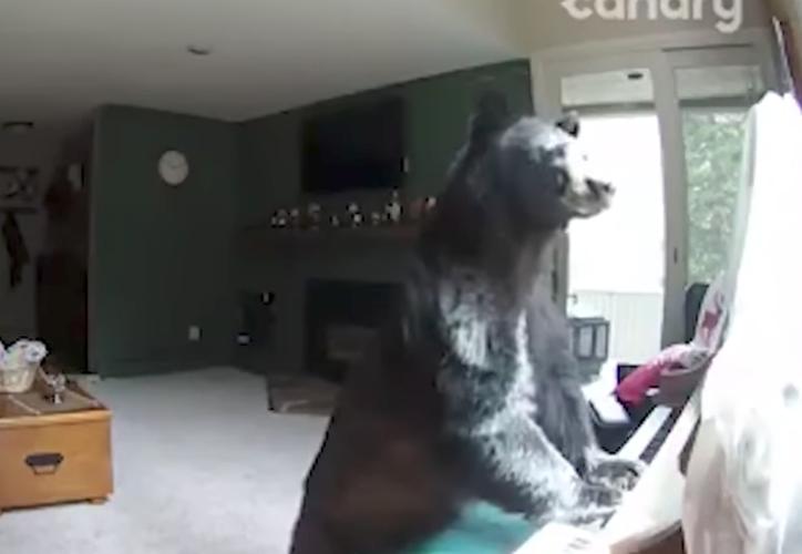 Una mujer reportó que alguien había entrado de forma forzada a su casa y al revisar la cámara de seguridad descubrió que fue un oso. (Foto: Captura del video)