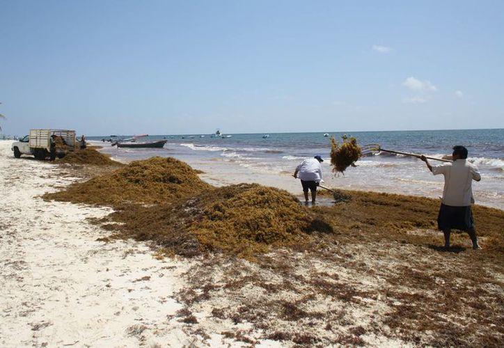 Se destinaron $15 millones al combate del residuo marino en la temporada vacacional pasada. (Sara Cauich/SIPSE)