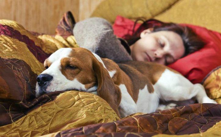 Recomiendan dejarlo dormir contigo, pero encima de las sábanas, ya que es más higiénico. (Foto: Contexto/SIPSE)