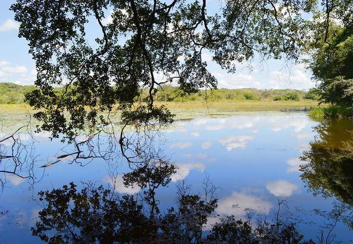 El proyecto incluye el estudio y monitoreo de algunas especies protegidas o en peligro de extinción. (Ángel Castilla/SIPSE)