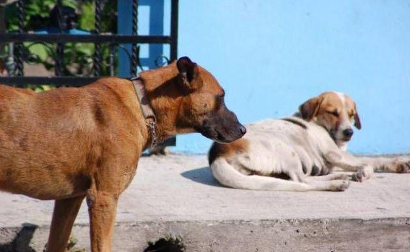 Los tulumnenses señalan que urge un inmueble para captar a los canes callejeros de la localidad. (Redacción/SIPSE)