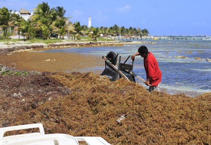 Para la limpieza de las playas se contará con tres maquinas pesadas y tres volquetes. (Gerardo Amaro/SIPSE)