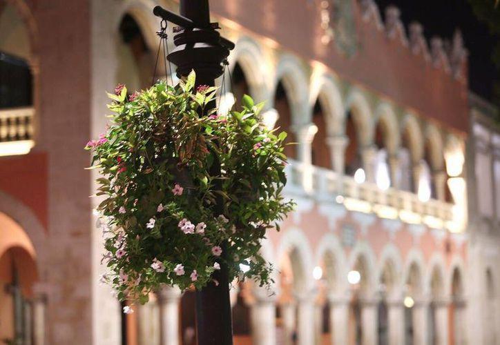 Desde hace unos días la Plaza Grande de Mérida luce plantas de ornato en los postes de iluminación. (Cortesía)