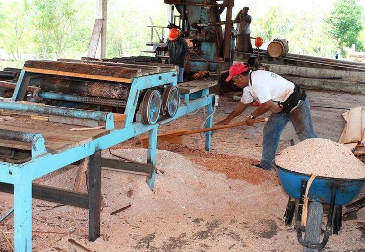 El núcleo agrario cuenta con un permiso de explotación forestal de 12 mil metros cúbicos anuales, incluyendo maderas preciosas, blandas y tropicales. (Edgardo Rodríguez/SIPSE)