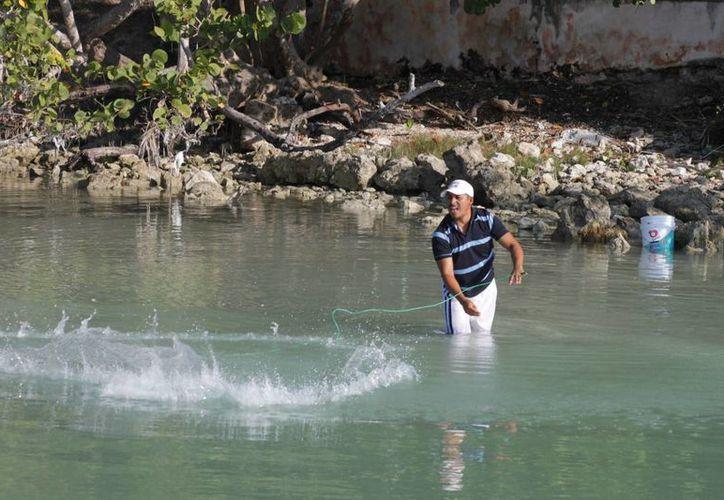 Pescadores de diferentes cooperativas se han comprometido a realizar una pesca responsable. (Archivo/SIPSE)
