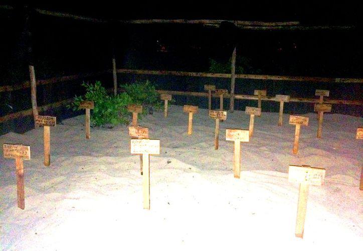 Dos casos se registraron en playas concesionadas en el sur del municipio de Solidaridad. (Redacción/SIPSE)