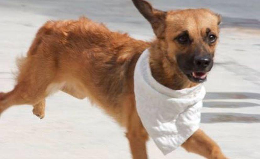 En la brigada solo se atenderán perros adultos. (Facebook /Dirección de Protección y Bienestar Animal)