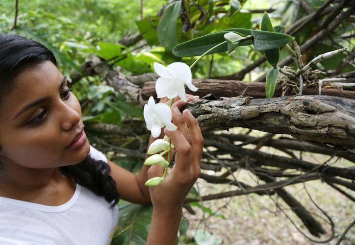 El Ayuntamiento invirtió 728,000 pesos en un jardín botánico que albergará unas 800 plantas de orquídeas. En la imagen, una niña observa una de las especies que podrán apreciarse en el zoológico Animaya. (Cortesía)