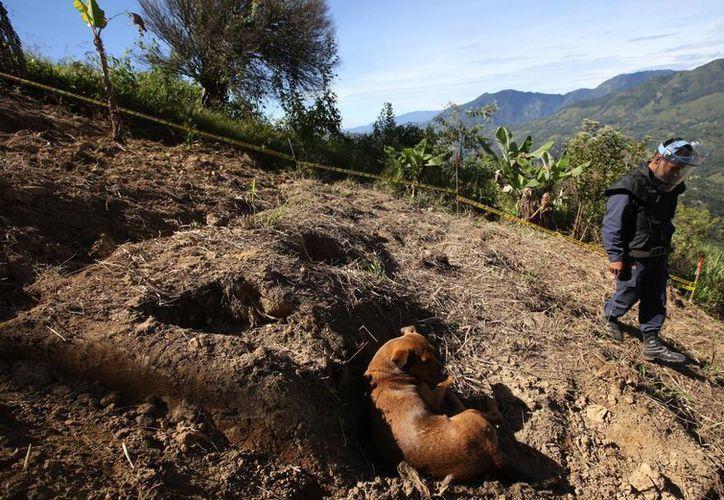 Un perro se echa en una zona que soldados limpiaron de minas antipersona en Cocorna, Colombia. (Agencias)