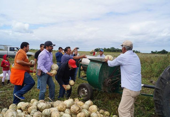 Son 96 productores de Chihua de los municipios de Bacalar, Othón P. Blanco y José María Morelos los que se asociaron. (Javier Ortiz/SIPSE)
