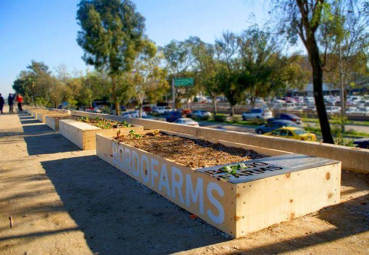 Bordo Farms es un proyecto de fincas urbanas centrado en el apoyo a la comunidad de deportados a través de la agricultura orgánica local autosustentable. (Facebook/BordoFarms)