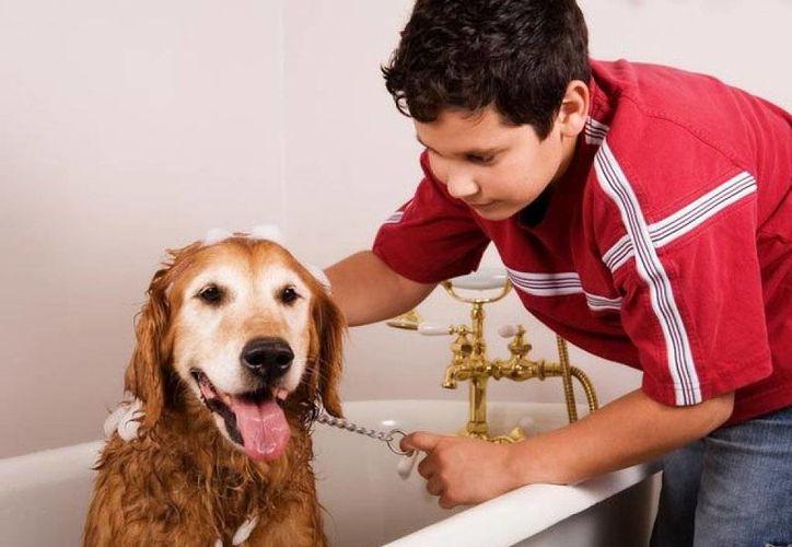 En estas vacaciones puedes bañar mascotas y cobrar por ello. (Contexto/Internet)