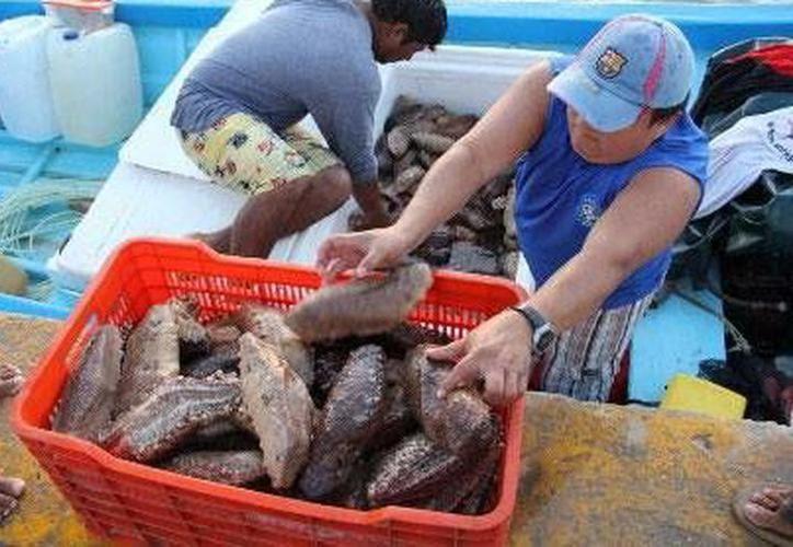 Al reducir aún más el tiempo de captura de esta especie, se corre riesgo de mermar la actividad económica de los pescadores. (Milenio Novedades)