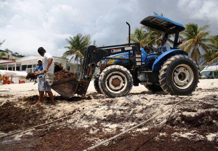 La Dirección de Zofemat en Playa del Carmen analiza extender el programa de recolección de sargazo. (Octavio Martínez/SIPSE)