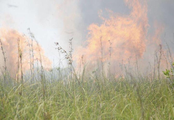 El incendio se ubicó entre las avenidas Kukulcán y Luis Donaldo Colosio. (Luis Soto/SIPSE)