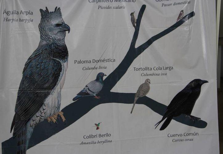 Entre las actividades está la observación de aves. (Tomás Álvarez/SIPSE)