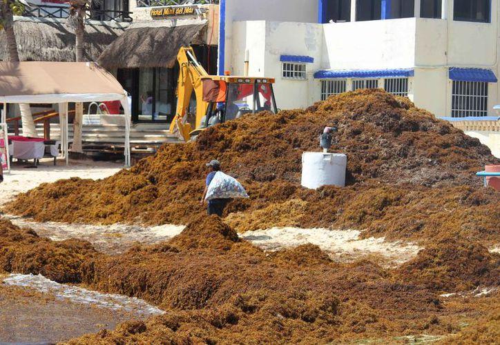 Incrementa el recale de sargazo en Playa del Carmen. (Octavio Martínez/SIPSE)