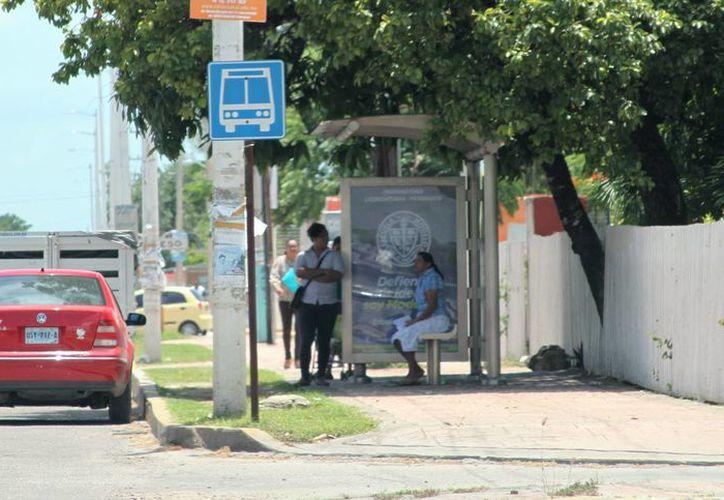 Cada paradero tiene un límite de seis espacios publicitarios. (Ángel Castilla/ SIPSE)