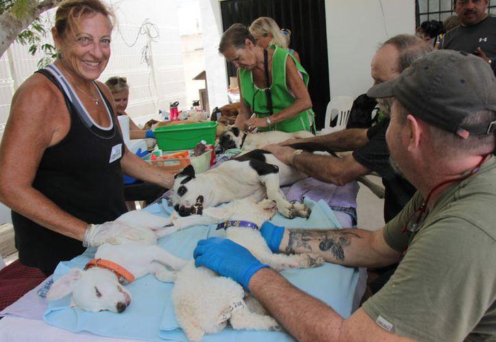 La campaña se llevó a cabo este fin de semana en el Centro Comunitario del Pintor. (Gustavo Villegas/SIPSE)