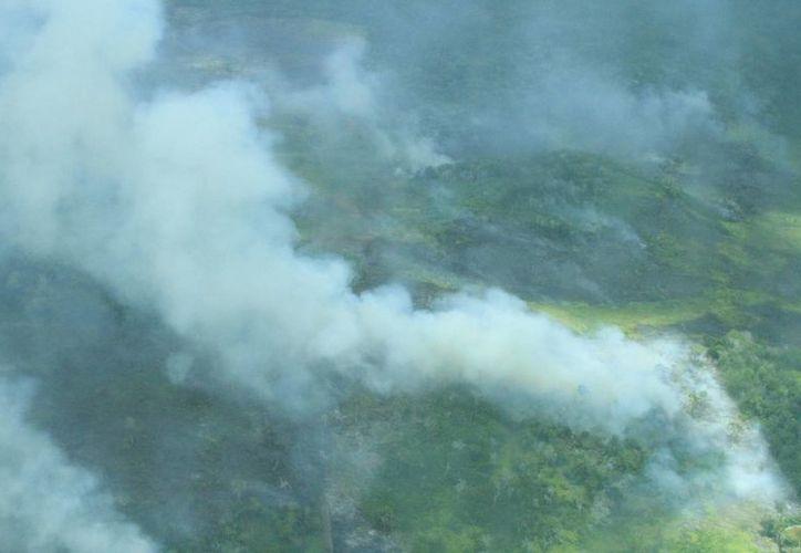 El incendios en Bacalar quedó liquidado durante la tarde de ayer. (Ángel Castilla/SIPSE)