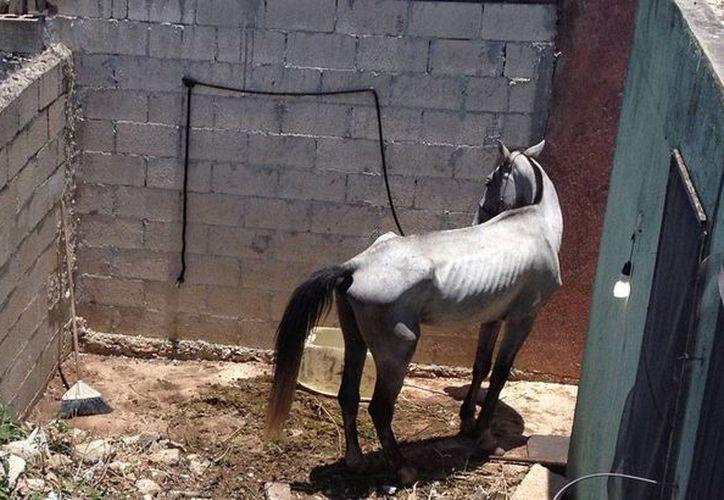 El caballo permanece en la parte trasera del predio, en condiciones poco higiénicas. (Foto tomada de Twitter)