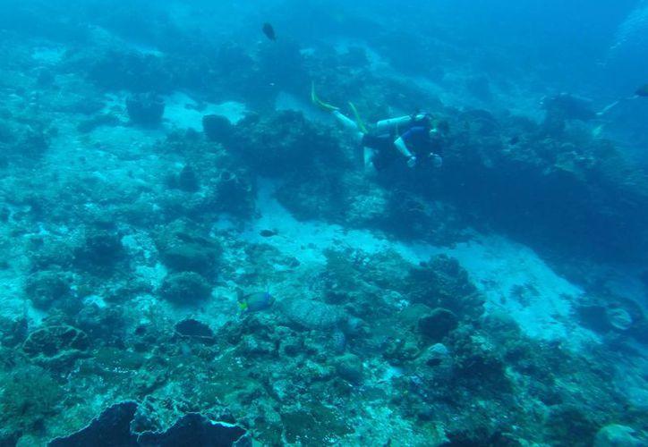 Las colonias de corales albergan cientos de especies marinas. (Luis Soto/SIPSE)