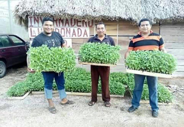 Lamentan el poco o nulo apoyo de las autoridades del gobierno del estado con los productores de chile. (Tony Blanco/SIPSE)