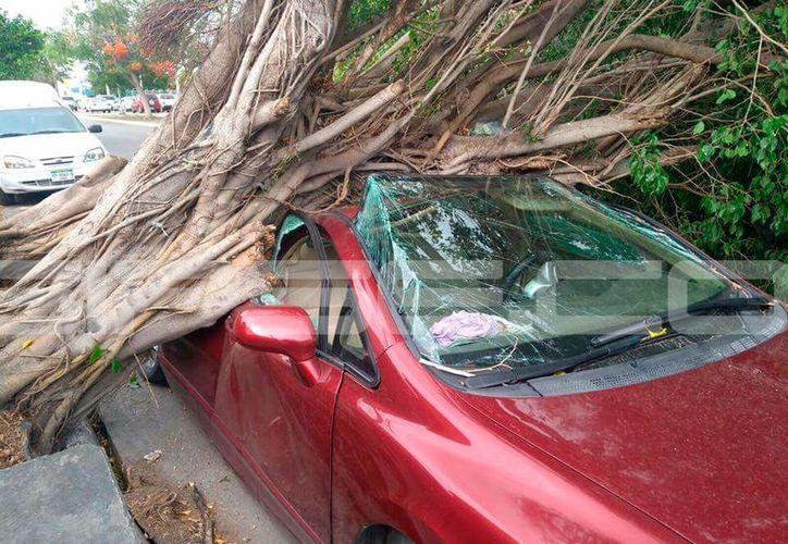 Los árboles caídos destrozaron varios vehículos en diferentes partes de la ciudad. (Fotografías y video: Milenio Novedades/Twitter)