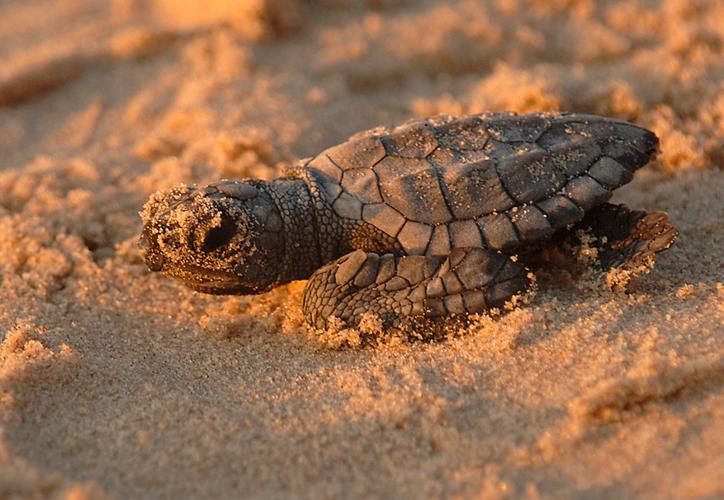 """El área había sido cerrada al público con una cinta amarilla y un cartel que decía """"No molestar a los nidos de tortugas marinas"""". (Pxhere)"""