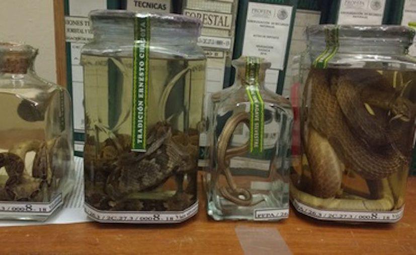 Encontraron 15 botellas con 18 ejemplares de reptiles y arácnidos. (Foto: Profepa)