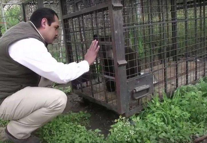 Durante la ejecución del Programa Nacional de Inspección a Zoológicos 2016 se aseguraron 133 animales por faltas sobre trato digno y respetuoso. Foto Cuartoscuro