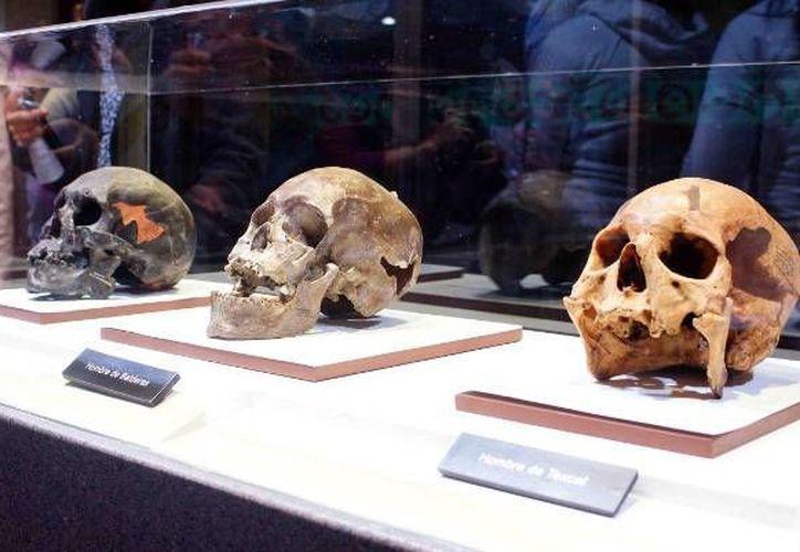 La exposición surge del interés por conocer nuestros orígenes y quiénes fueron nuestros ancestros que poblaron el Continente Americano. (Foto de Contexto/Internet)