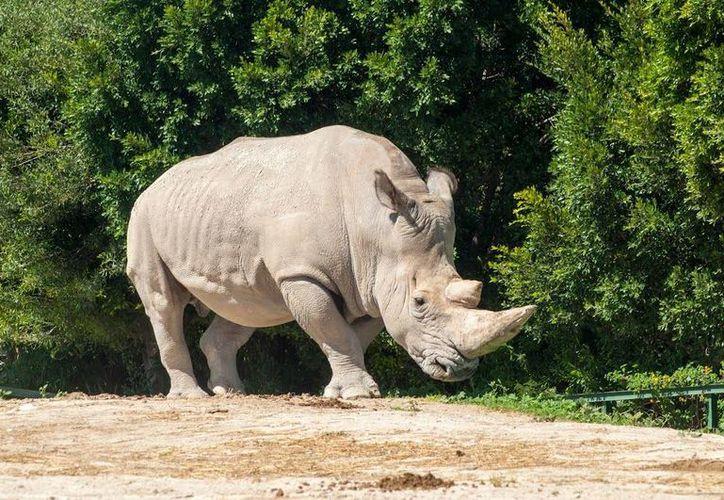 Se informó que los cinco mamíferos restantes son de edad avanzada, lo que dificulta el proceso. (panoramio.com)