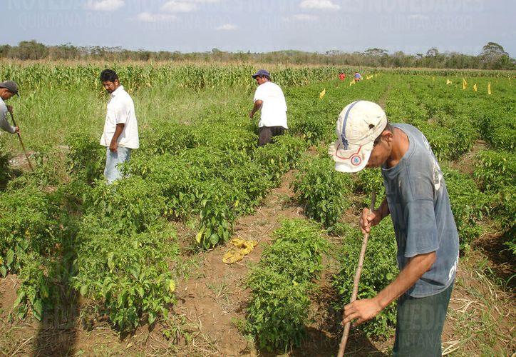 """Campesinos fueron estafados por la Organización Civil """"Villas de Ayuda"""". (Foto: Joel Zamora)"""
