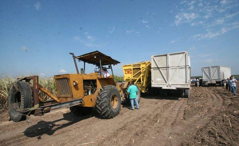 El dirigente consideró un golpe brutal a la economía de los productores de caña. (Juan Rodríguez/ SIPSE)