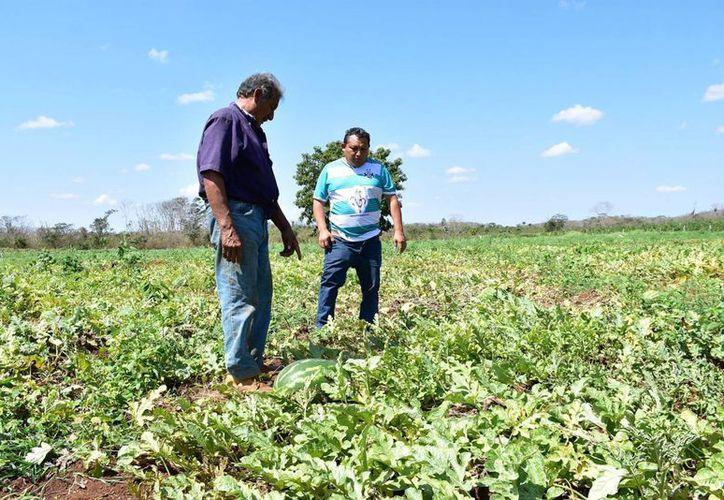 Los campesinos agradecieron el respaldo de las autoridades. (Tony Blanco/ SIPSE)