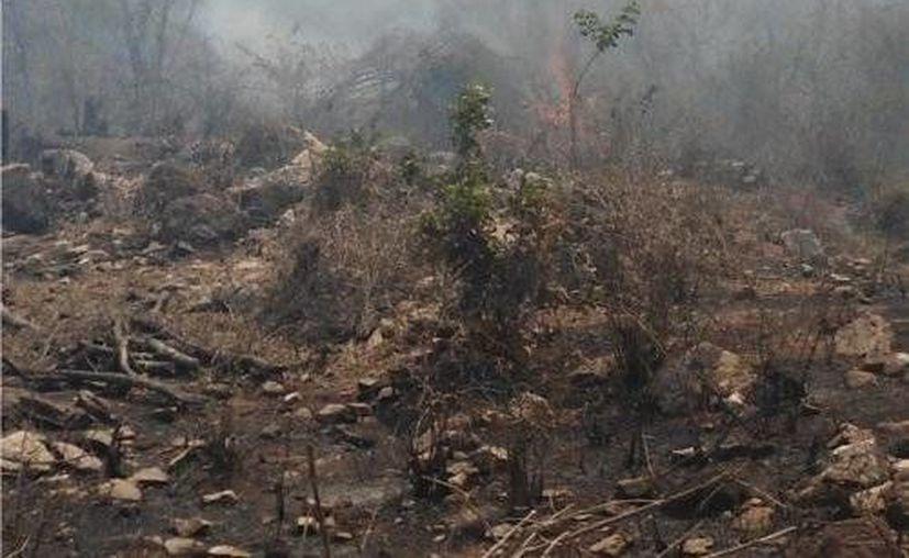 """El incendio """"La Amistad"""", en la colonia El Pedregal de este destino, quedó controlado. (Contexto/Internet)"""