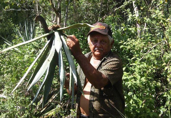 En el local de la calle 60 de Mérida artesanos fabrican artículos a base de fibra de henequén sembrada y cosechada en su población. (Sergio Grosjean/SIPSE)